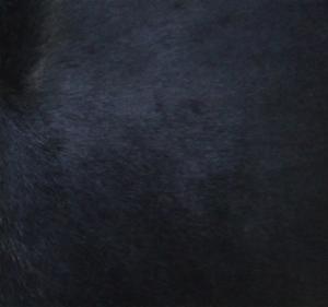 Пони (мех)