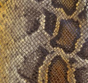 Серо-жёлтый питон